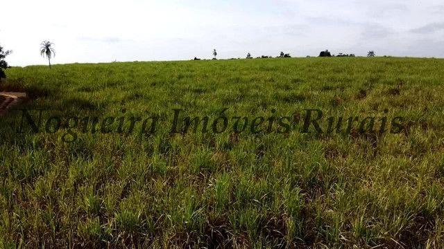 Fazenda com 69 alqueires na região (Nogueira Imóveis Rurais) - Foto 3