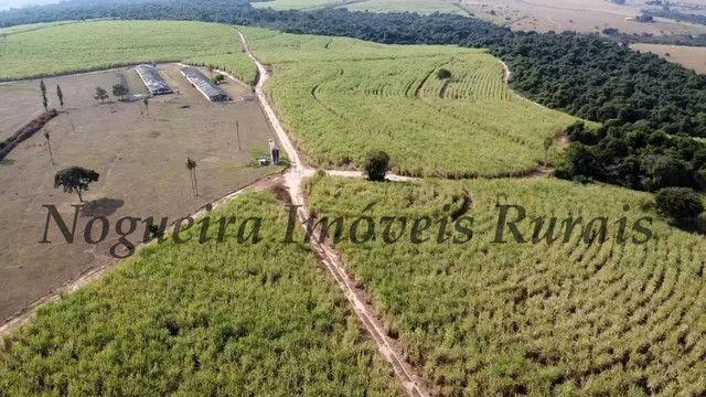 Fazenda com 69 alqueires na região (Nogueira Imóveis Rurais) - Foto 14