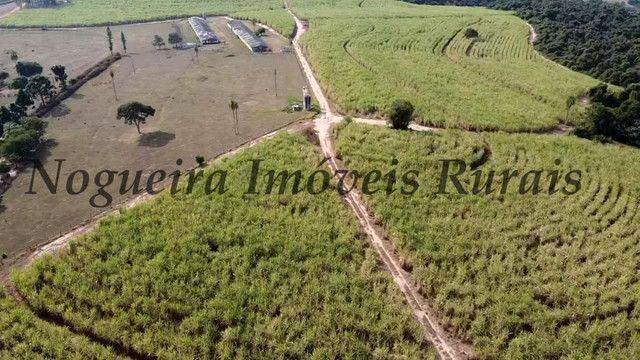 Fazenda com 69 alqueires na região (Nogueira Imóveis Rurais) - Foto 9