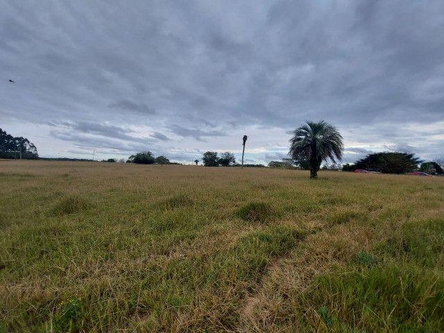 Sitio 8 hectares, 2 casas e pomar, ótimas pastagens, Velleda oferece - Foto 4
