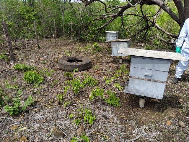 Enxame de abelha italiana. - Foto 3