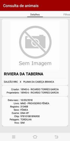 Riviera da Taberna. MM (Pradoso-Conquista) LER ANÚNCIO - Foto 2