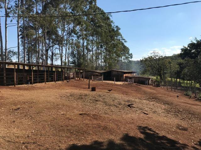 Sitio de 4 Alqueires em Londrina Pr - Foto 18