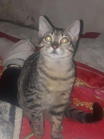 Doação de 2 lindas gatinhas  - Foto 2