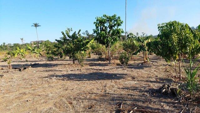 Vendo Sítio de 35 Hectares no KM 100, Ramal São Bernardo. BR 319.   - Foto 8