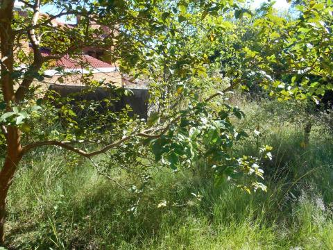 Terreno à venda em Jardim america, São leopoldo cod:9941 - Foto 4