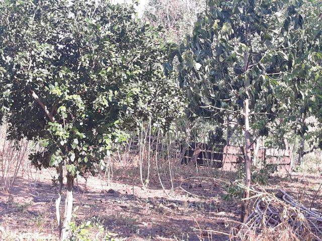 Chácara de 54 hectares, chapada,sendo 33 formado - Foto 10