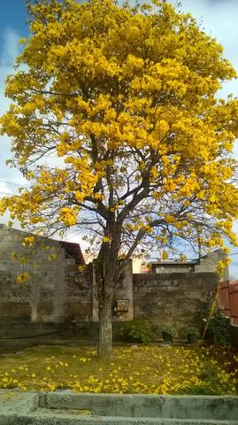 Casinha Aconchegante - Foto 7