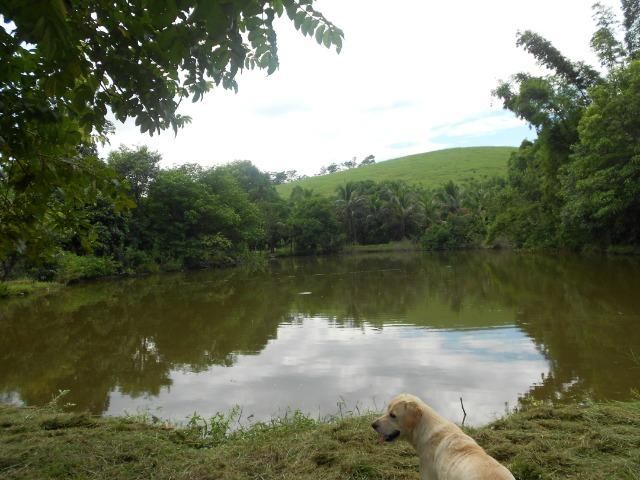 Jordão Corretores - Fazendinha 18 hectares Cachoeiras de Macacu - Foto 19