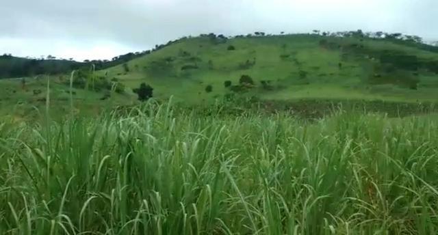Propriedade de 140 hectares, entre Vitória e Escada-PE.