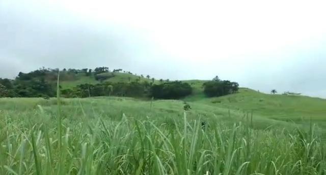 Propriedade de 140 hectares, entre Vitória e Escada-PE. - Foto 3
