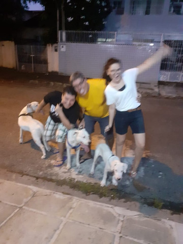 Creche para caes / day care dog - Foto 5