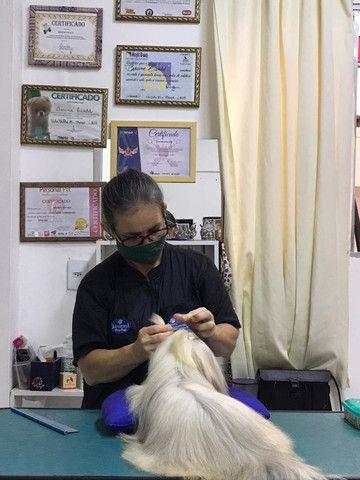 Pet Shop E Banho Tosa - Foto 2