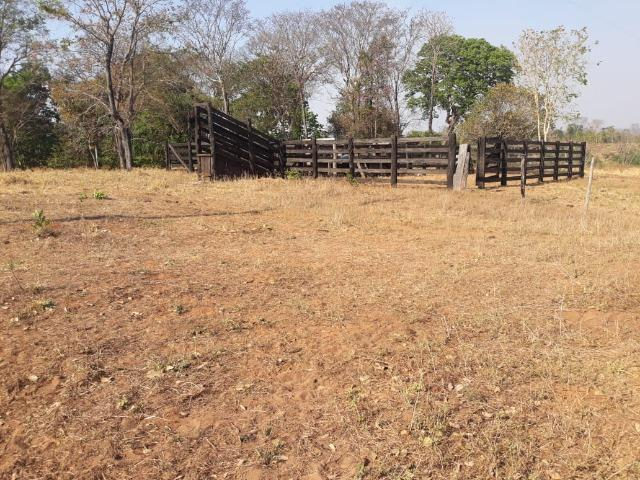 Chácara de 54 hectares, chapada,sendo 33 formado - Foto 13