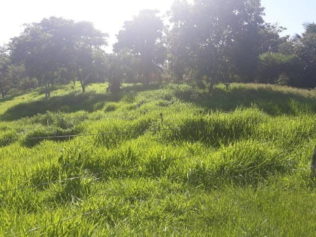 Chácara de 54 hectares, chapada,sendo 33 formado - Foto 5
