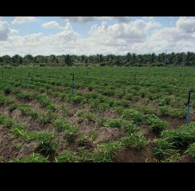 Linda Fazenda com 84 hectares próximo a Vera cruz - Foto 4