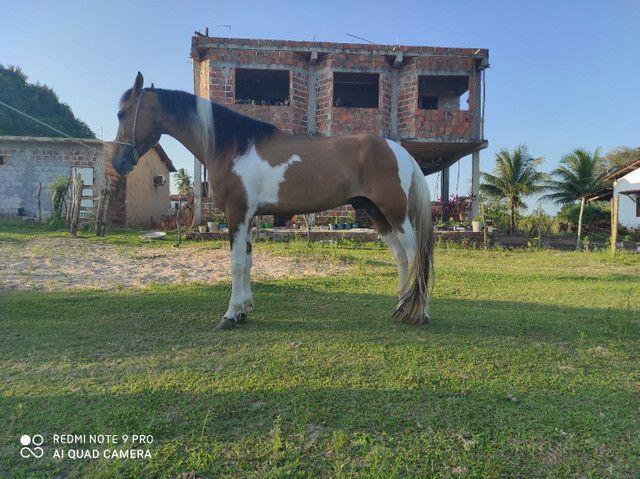 Cavalo manga larga  - Foto 2