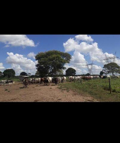 Linda Fazenda com 150 Hectares estruturada na Região de Macaiba - Foto 6