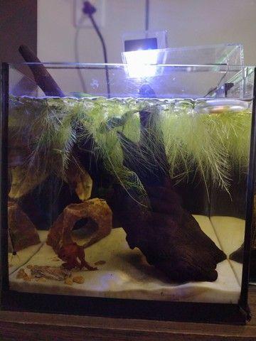 Plantas de superficie aquática - Foto 2