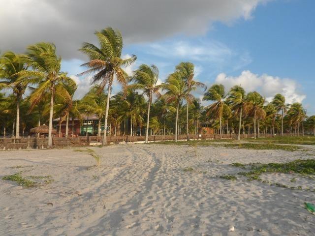 Gleba de Terras, Ilha de Tubarão, Camamu-BA - Foto 16