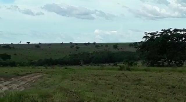 Fazenda de 853 hectares .400 hectares mecanizados . Colinas do Tocantins- TO - Foto 11