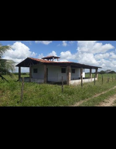 Linda Fazenda com 150 Hectares estruturada na Região de Macaiba - Foto 12