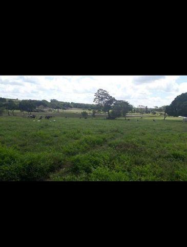 Linda Fazenda com 150 Hectares estruturada na Região de Macaiba - Foto 4
