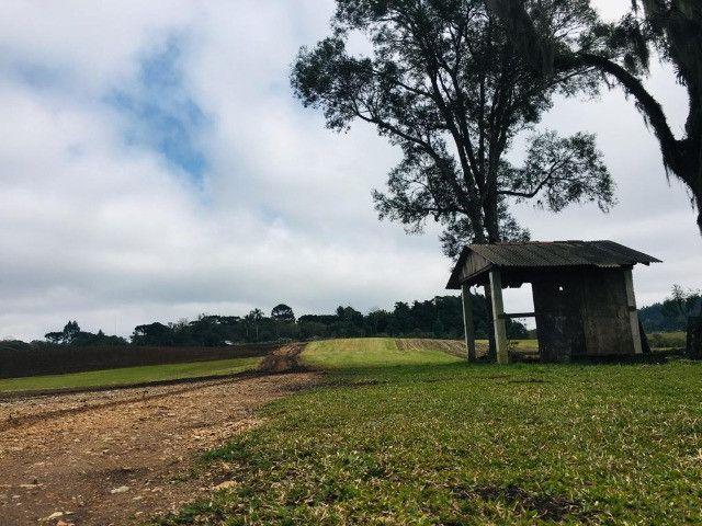 Área Rural em São José dos Pinhais - Foto 8
