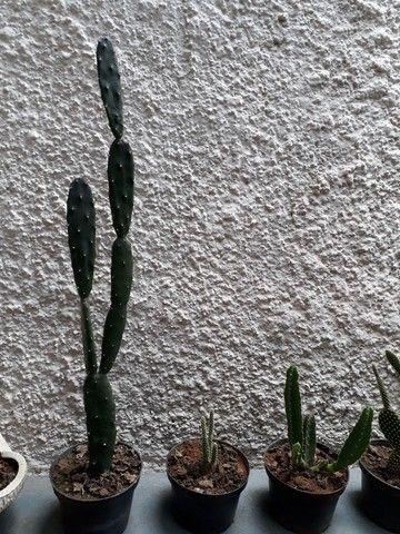 Cactus.  - Foto 4