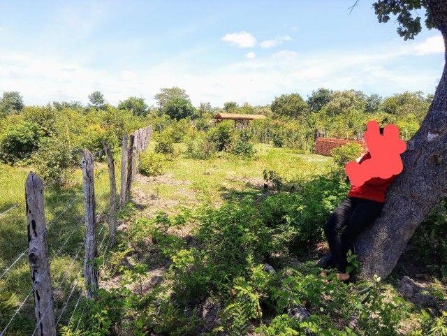 Vendo este terreno em Boa Hora/ PI - Foto 2
