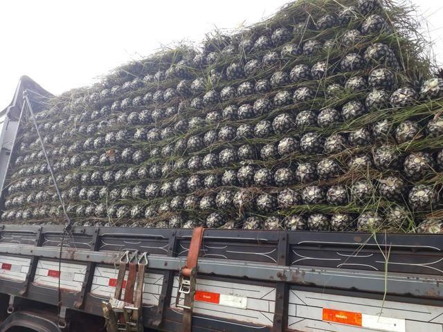 Vendo abacaxi no atacado
