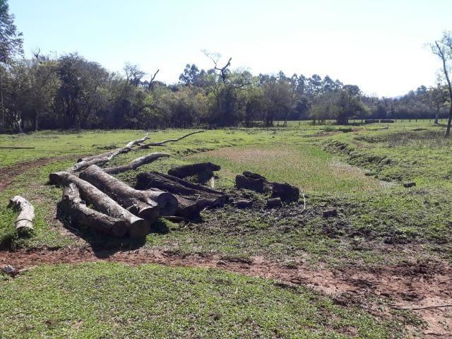 Área de campo em lindolfo collor - * - Foto 3
