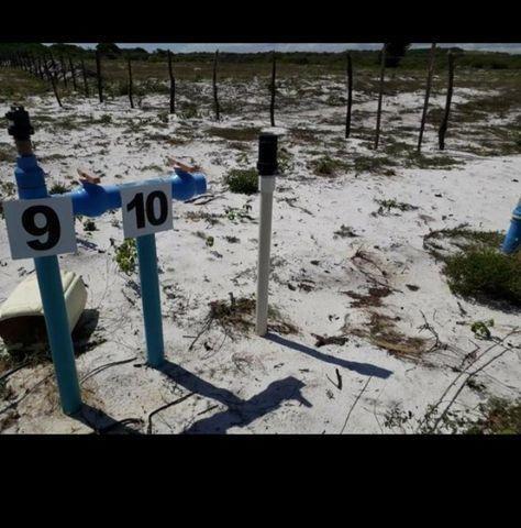 Linda Fazenda com 70 hectares na região de Ceará mirim com rio perene - Foto 15