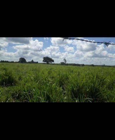 Linda Fazenda com 150 Hectares estruturada na Região de Macaiba - Foto 9