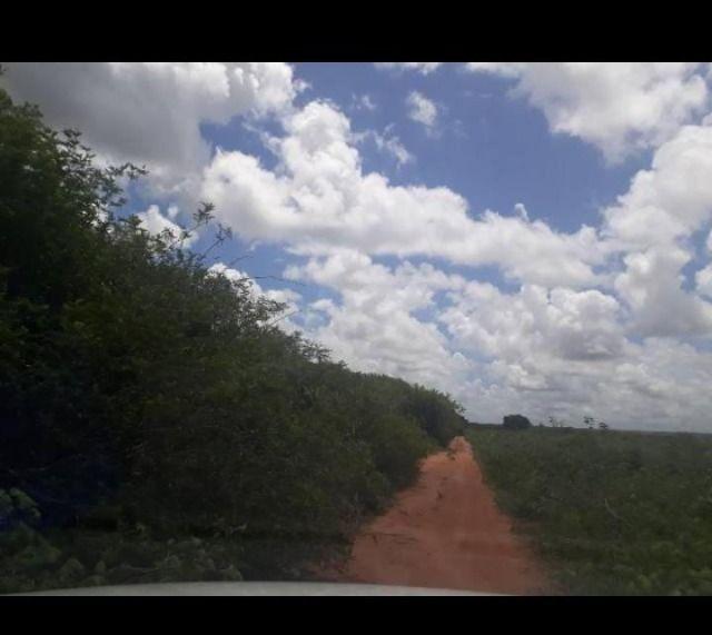 Linda Fazenda com 170 Hectares em Pureza só terra - Foto 2