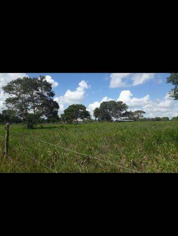 Linda Fazenda com 150 Hectares estruturada na Região de Macaiba - Foto 11