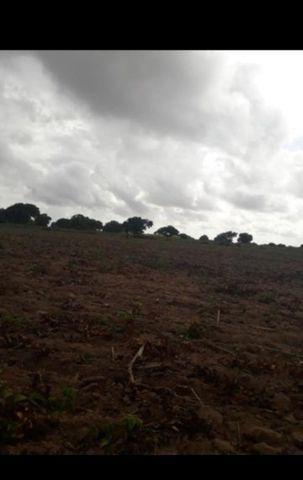 Linda Fazenda com 45 hectares na região monte alegre - Foto 9