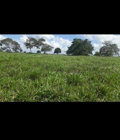 Linda Fazenda com 150 Hectares estruturada na Região de Macaiba - Foto 17