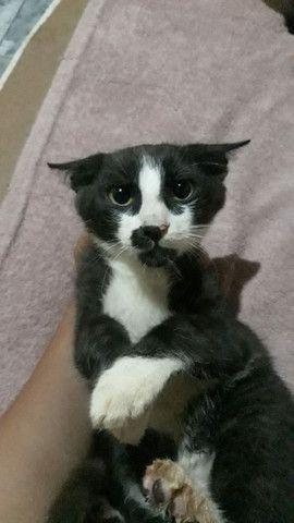 Estou doando esses gatos!!!!
