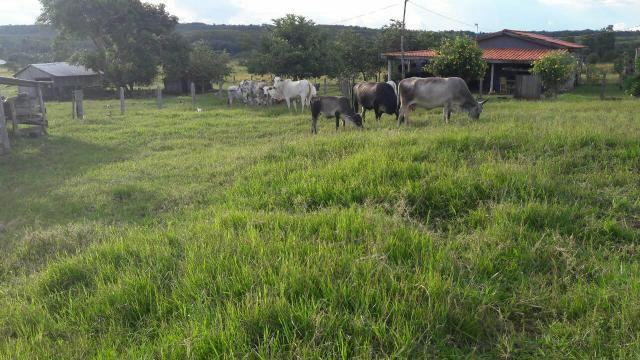Vendo sítio, no município de Chapada dos Guimarães, à 80 km da cidade - Foto 6