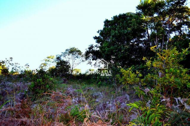Terreno à venda, 40.920m² por R$ 690.000 - Barra Grande - Maraú/BA - Foto 14