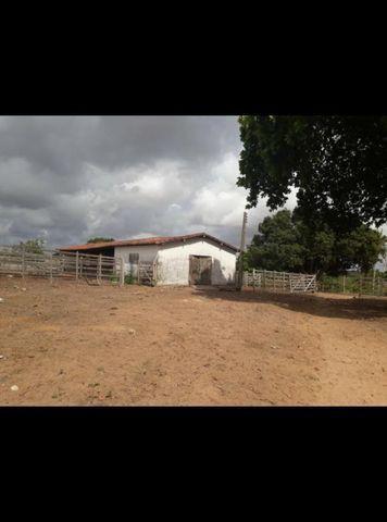 Linda Fazenda com 45 hectares na região monte alegre - Foto 4