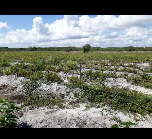 Linda Fazenda com 70 hectares na região de Ceará mirim com rio perene - Foto 2