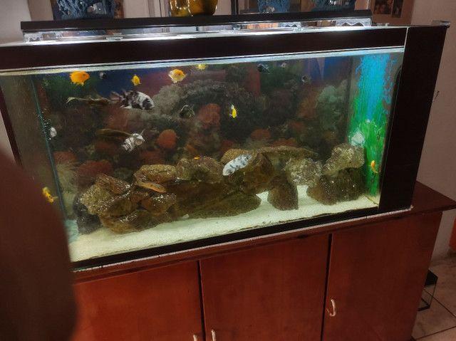 Vendo aquário completo