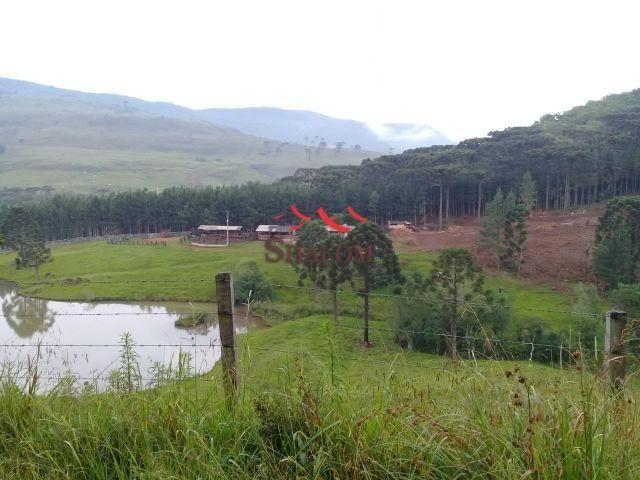 8051 | fazenda à venda em fazenda pinhão, pinhão - Foto 3