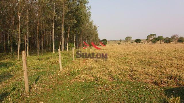 8051 | Fazenda à venda em NÃO INFORMADO, NAVIRAI - Foto 3