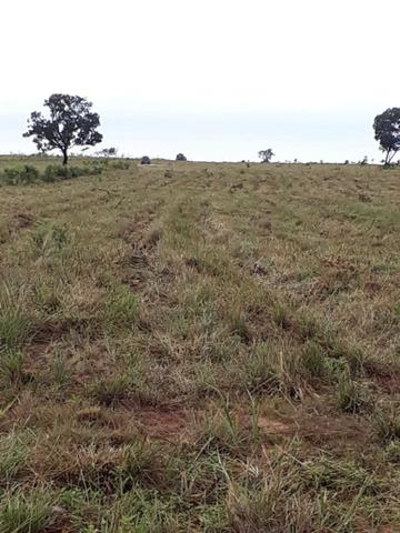 Fazenda de 853 hectares .400 hectares mecanizados . Colinas do Tocantins- TO - Foto 14