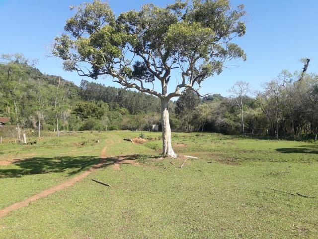 Área de campo em lindolfo collor - * - Foto 4