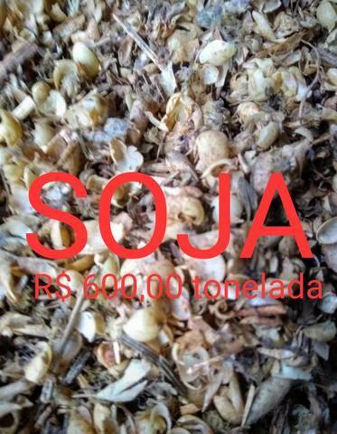 Resíduos de Soja e Milho Secos