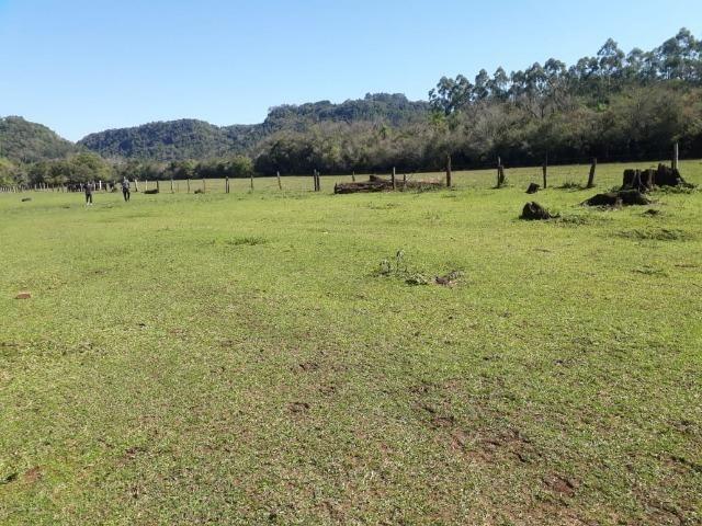 Área de campo em lindolfo collor - * - Foto 2